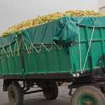 Lonas para agricultura